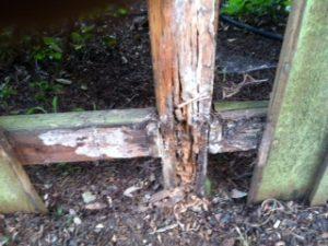 Fencing - Rotten fence post